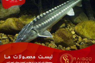 خرید ماهی خاویاری